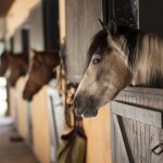 Tipos e tamanhos de Baia para cavalos
