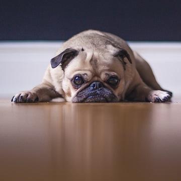 doenças neurológicas em pequenos animais