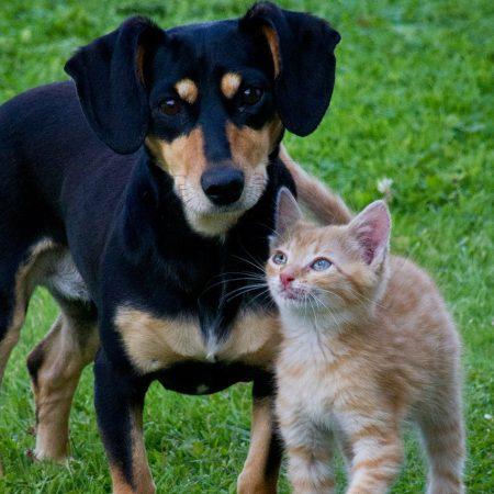 A importância dos animais na vida das pessoas [você não pode ignorar a número #3]