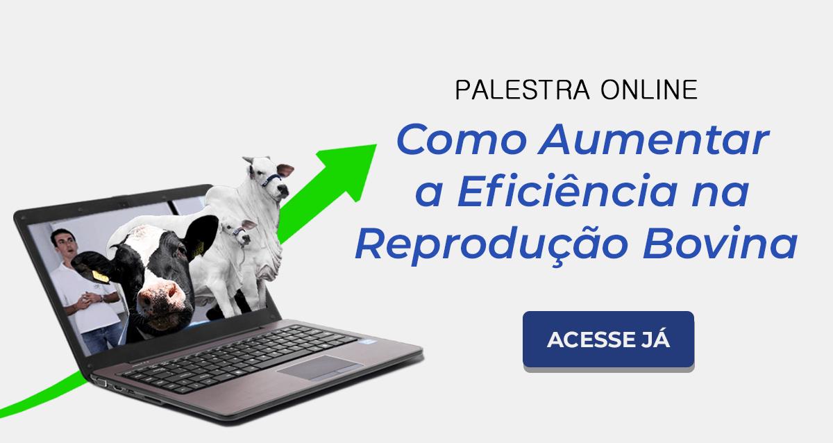 Palestra on-line: Como aumentar a eficiência na reprodução bovina