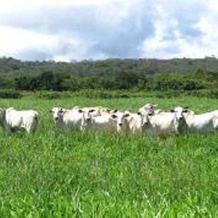 Vale a pena investir na formação de pastagens em áreas de Cerrados? Qual a melhor época para se realizar o plantio?