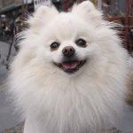 Alopecia em cães