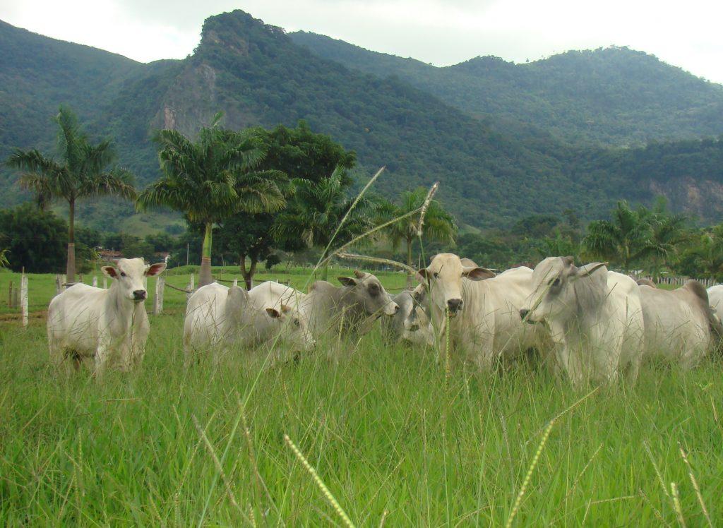 Tudo que você precisa saber para não perder dinheiro na criação de gado de corte