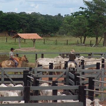 Curral para gado