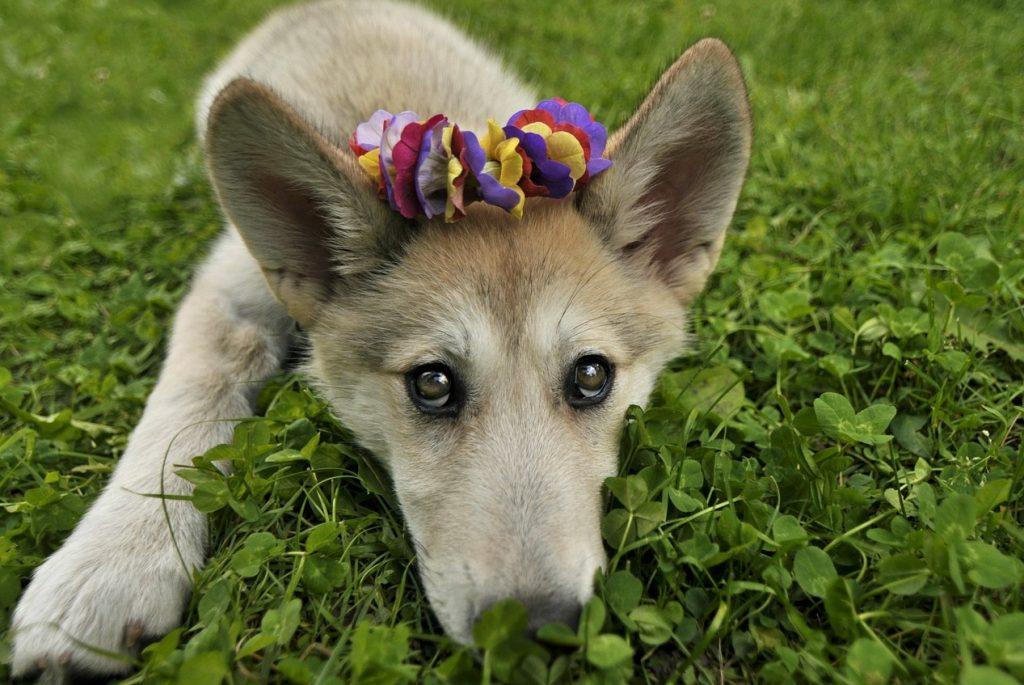 Piometra Em Cadelas Doença Silenciosa Que Pode Levar Ao óbito