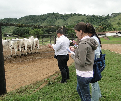 Administração de gado de corte