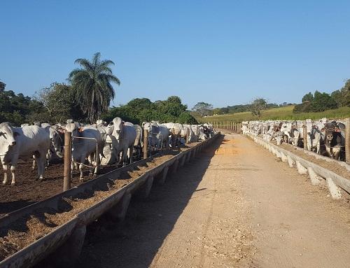 Estrutura de confinamento para gado de corte