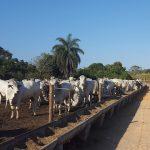 estrutura de confinamento gado de corte
