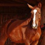 tétano em cavalos