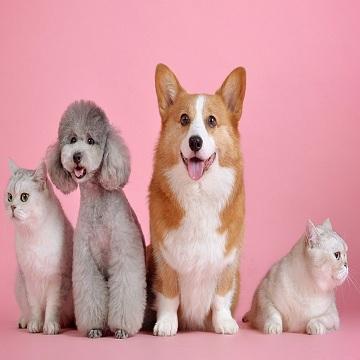 Anestesia em pequenos animais