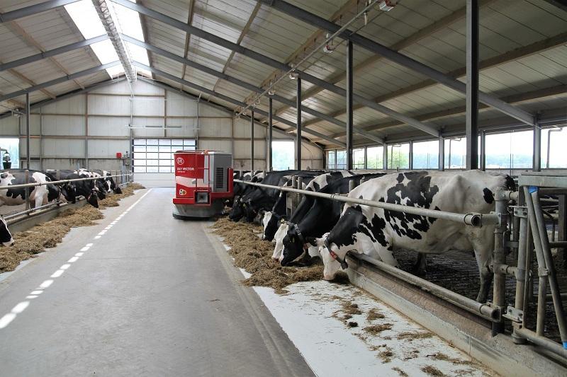 Cetose em vacas leiteiras