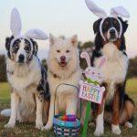 Chocolate e Pets Combinação que pode ser letal
