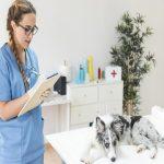 Como ser o médico veterinário mais desejado do mercado 5 passos que a faculdade não te ensina