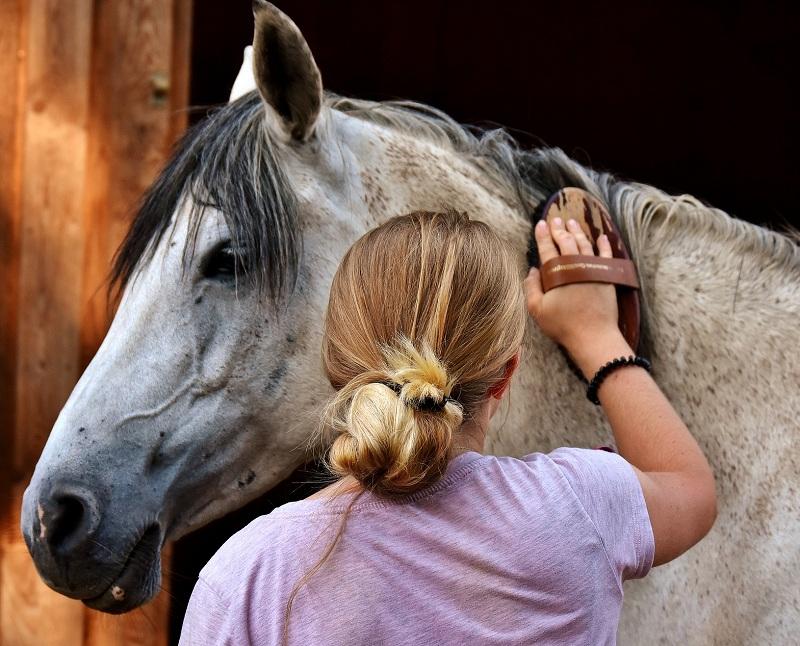 Saúde dos cavalos