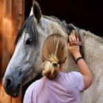 saúde do cavalos Um guia em 5 passos simples