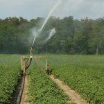 Manejo de Irrigação