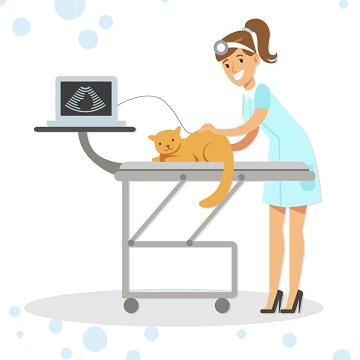 ultrassonografia em pequenos