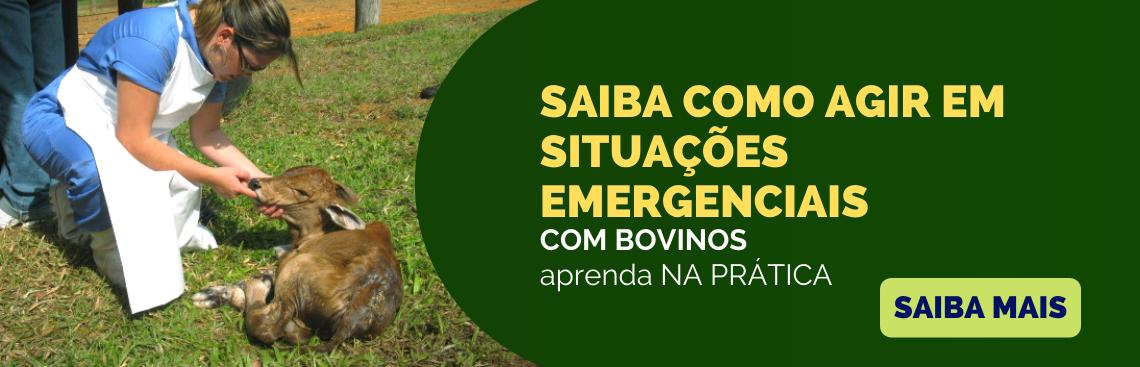 CURSO DE PRIMEIROS SOCORROS EM BOVINOS BANNER