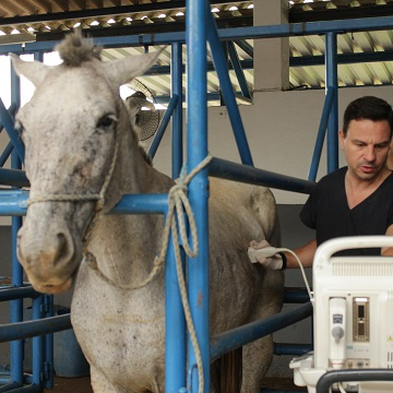 Ultrassonografia em equinos