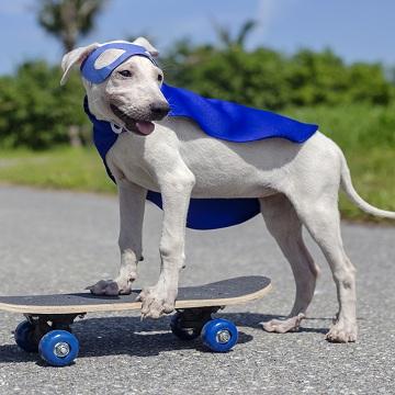 Osteoartrite em cães