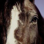 Principais doenças em equinos