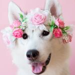 câncer de mama em cadelas