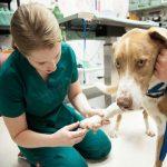 cirurgias ortopédicas em cães