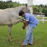 claudicação em equinos