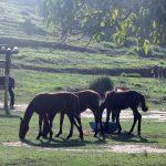 manejo equinos