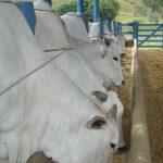 formulação de dietas para bovinos