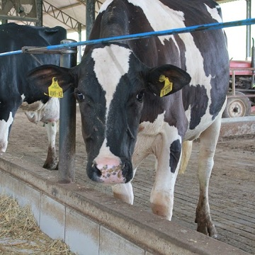 The construction of the dairy cattle corral is a very important step in the planning of a property and it requires a lot of attention and care.