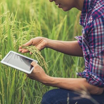 agricultura lucrativa