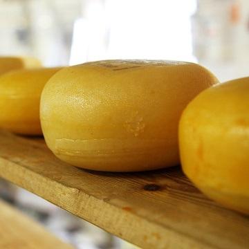como produzir queijos
