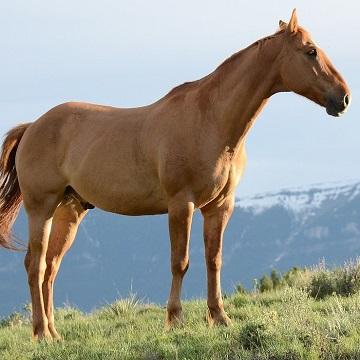 nutrição de equinos