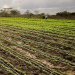 irrigação inteligente