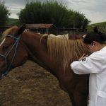 sinais vitais de equinos