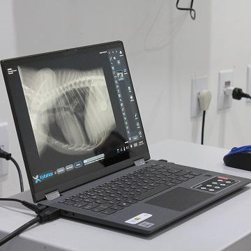 Radiografia em pequenos animais