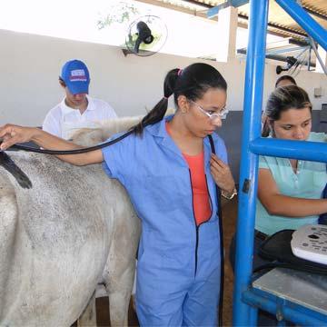 Entenda os diferentes tipos de claudicação em equinos