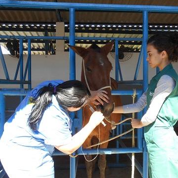 Fluidoterapia em equinos