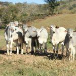 doenças reprodutivas em bovinos