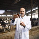 vacinação em bovinos