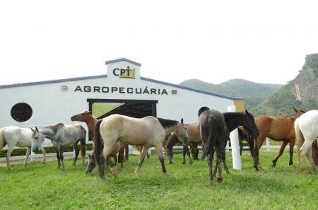 Curso Conhecendo os Cavalos: Manejo, alimentação, e cuidados no dia a dia