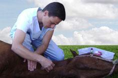 Curso de Anestesia em Equinos a Campo