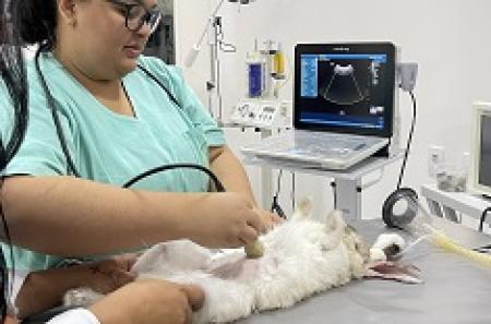 Curso de Animais Silvestres e Não-Convencionais na Clínica de Pequenos Animais
