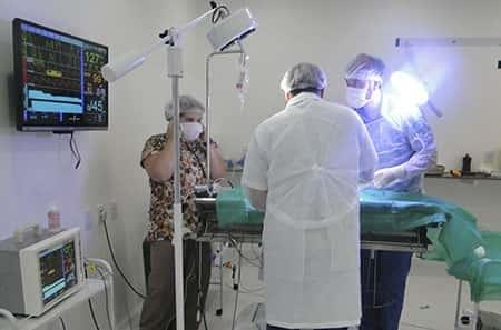 Curso de Cirurgias Ortopédicas em Pequenos Animais (Módulo Avançado)