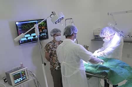 Curso de Cirurgias Ortopédicas em Pequenos Animais