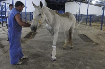 Curso de Diagnóstico de Claudicação em Equinos