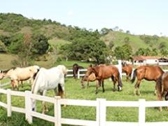 Curso de Formulação de Dietas e Rações para Equinos