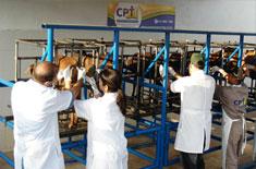 Curso de Inseminação Artificial Transcervical em Ovinos