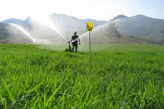 Curso de Irrigação e Manejo de Pastagens